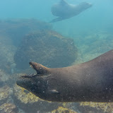 galapagos - Galapagos_FB-61.jpg