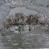 reflection-in-ice-puddle_MG_2718-copy.jpg