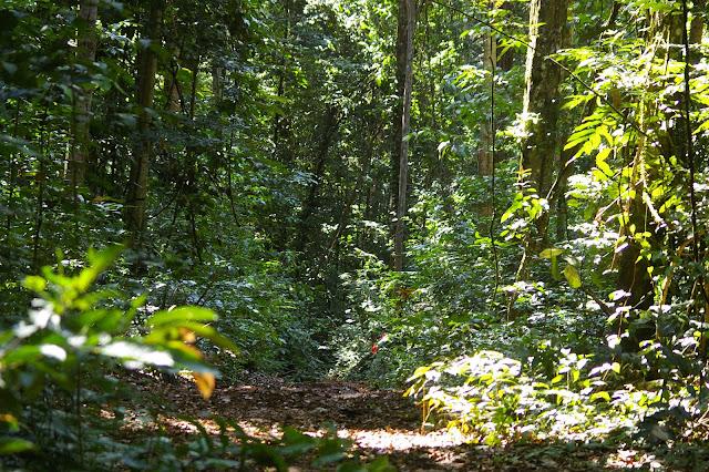 Layon entre Popote et Saül (Guyane), 1er décembre 2011. Photo : J.-M. Gayman