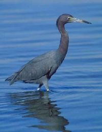 [bayoffundy.ca-SEABIRDS-40-Good-reaso%5B85%5D]
