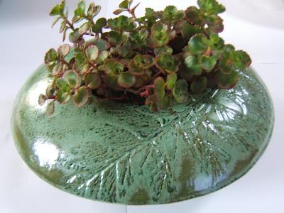 Coniferous Alpine planter