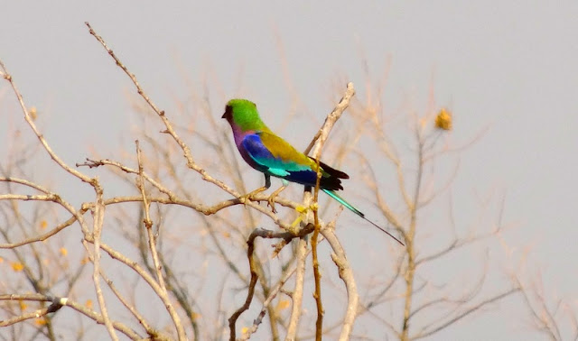 Botswana - DSC00679.JPG