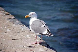 Усны шувууд