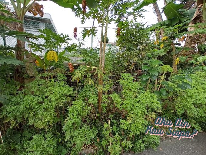 Kesiannya Tengok Kebun Depan Rumah Terbengkalai 😔