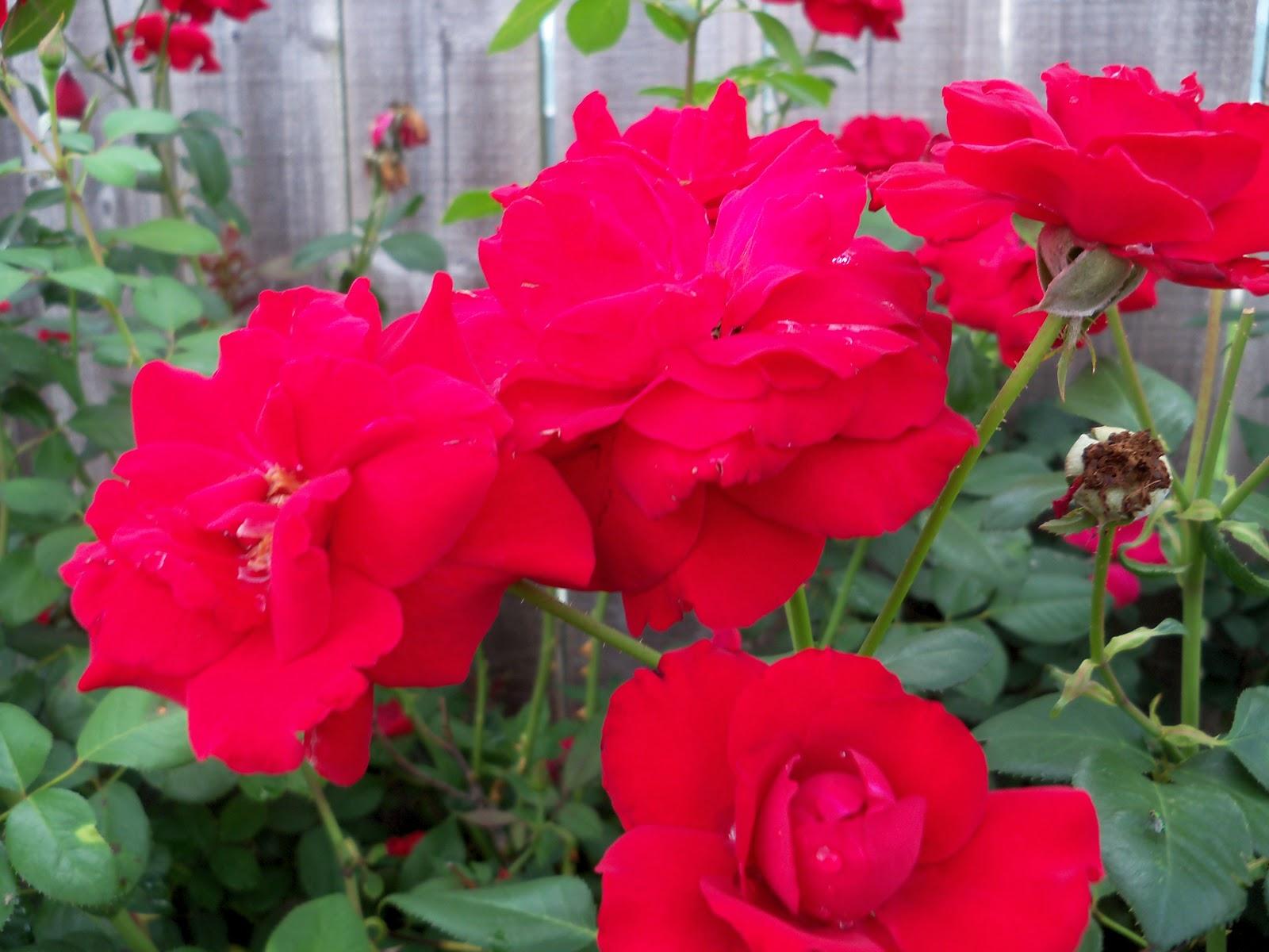 Gardening 2010, Part Three - 101_3570.JPG