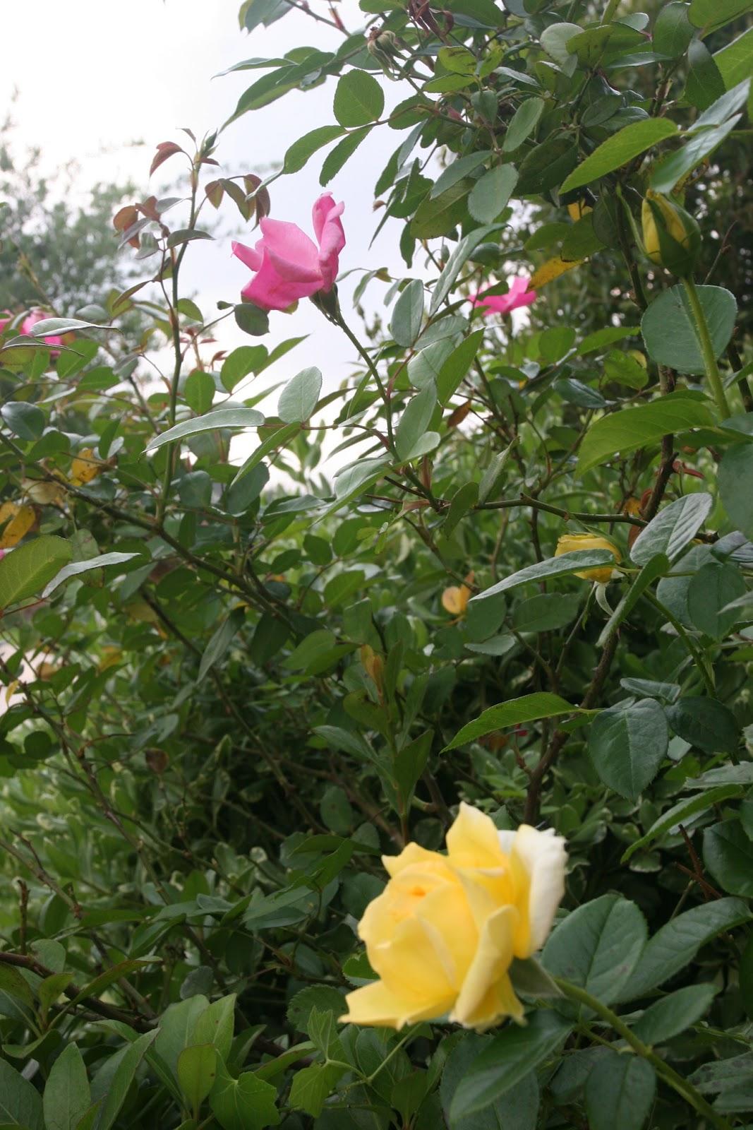 Gardening 2012 - IMG_3350.JPG