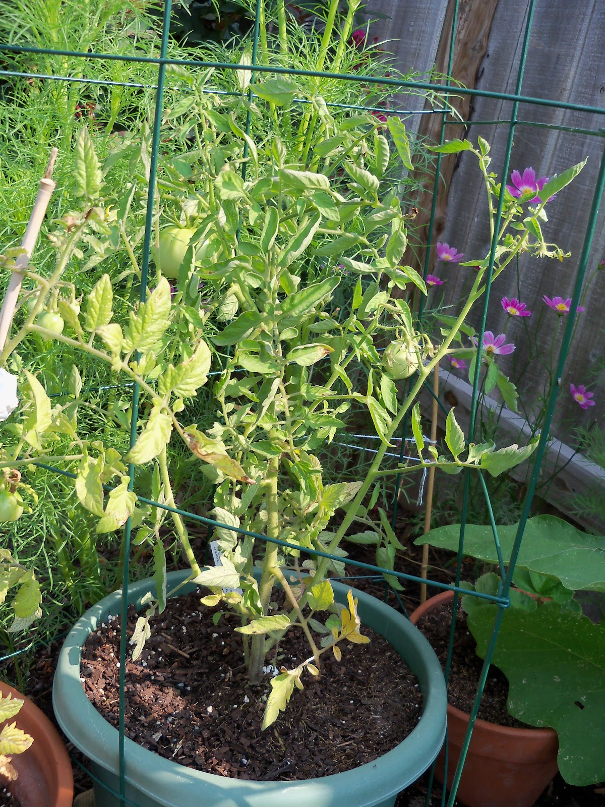 Gardening 2010, Part Two - 101_3080.JPG