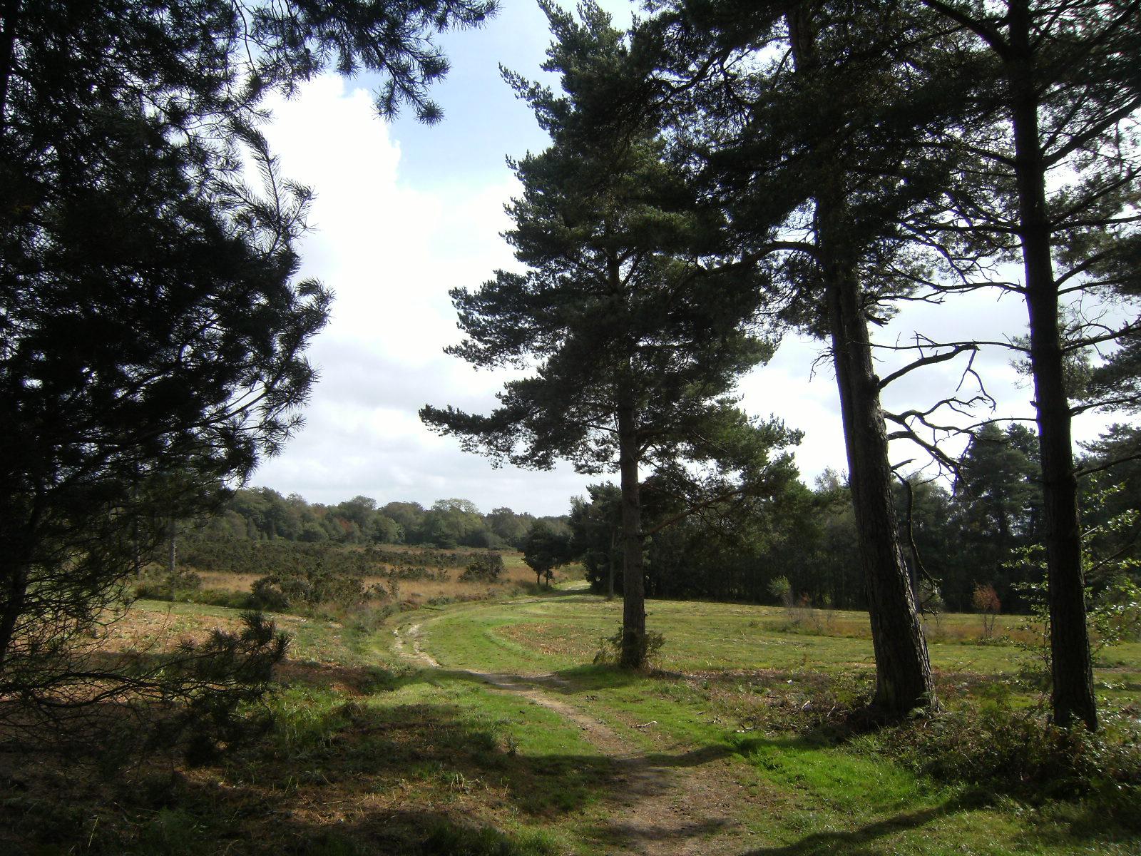 DSCF9557 Through Ashdown Forest