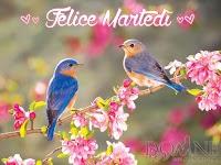 buon martedi immagine con frase aforismo uccellini alberi in fiore felice martedi.jpg