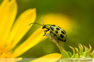 Bug /Photography by Пүүжээ/