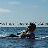 DSC_2230.thumb.jpg