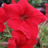 Gardening 2012 - IMG_3364.JPG