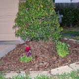 Gardening 2014 - 116_1153.JPG