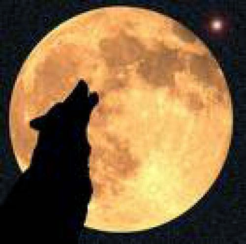 A Moon Fit For Stalking Wolf