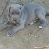 True Blue...as he grew - bluetrueblue.jpg