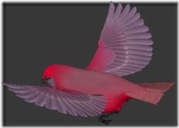 palomas (3)