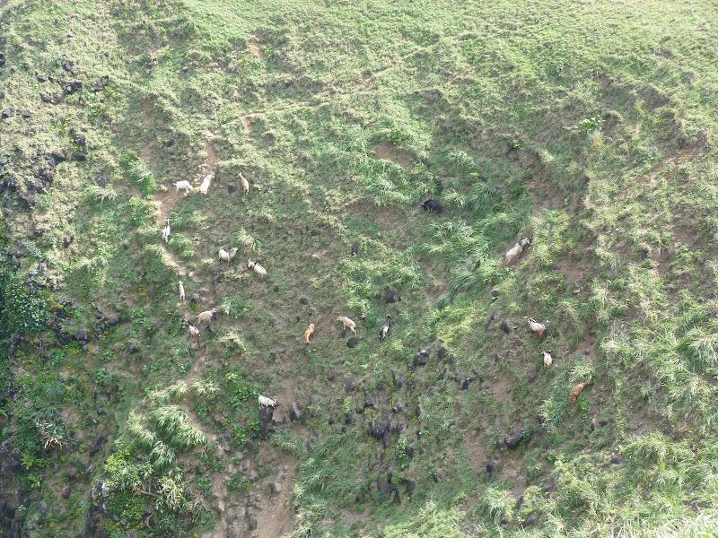 TAIWAN Ile de Lanyu - P1010253.JPG