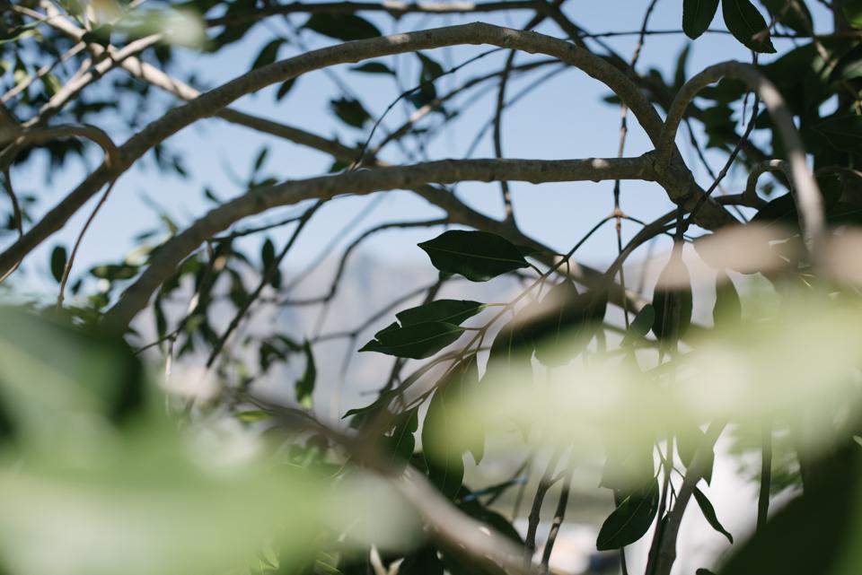 Grace and Alfonso wedding Clouds Estate Stellenbosch South Africa shot by dna photographers 14.jpg