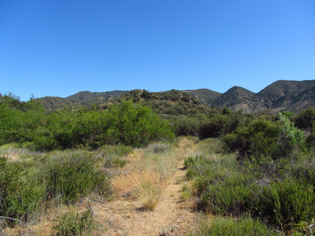 a bit of well trod trail