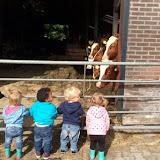 Peuters Villa Veldhof op bezoek bij de boerderij