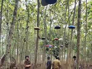 Wisata Jatidipala Bumdes Sumberjaya di Launching Bupati Besok