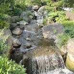 beautiful creek at Asakusa Kannon Temple in Asakusa, Tokyo, Japan