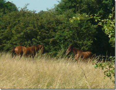 2 horses galloped away