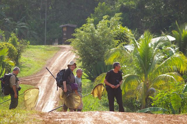 Saül (Guyane). 30 novembre 2011. Photo : J.-M. Gayman