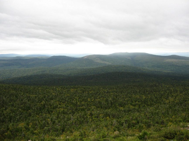 A September 2017 study predicts there will be an overall decline in the size of the Acadian forest because the increase in hardwoods like red maples won't make up for the lost softwoods. Photo: Natural Resource Canada