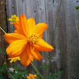 Gardening 2011 - 100_8672.JPG