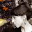 Susan von Frank's profile photo