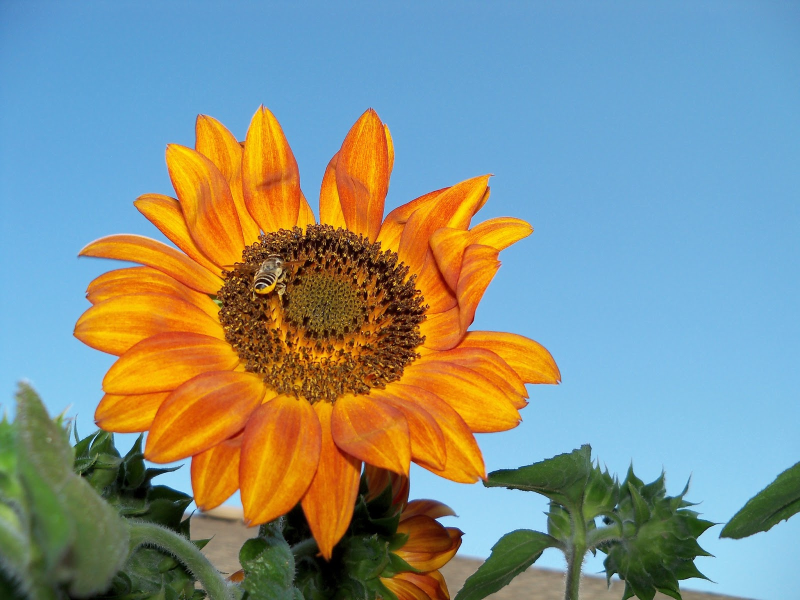 Gardening 2011 - 100_9250.JPG