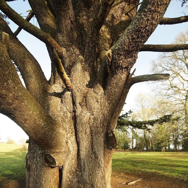 Stowe_Trees_35.JPG