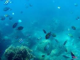 family trip pulau harapan, 1-2 agustus 2015 gopro 18