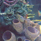 Downtown Aquarium - 116_3934.JPG