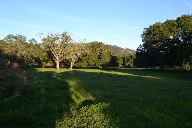 flat grass and oaks