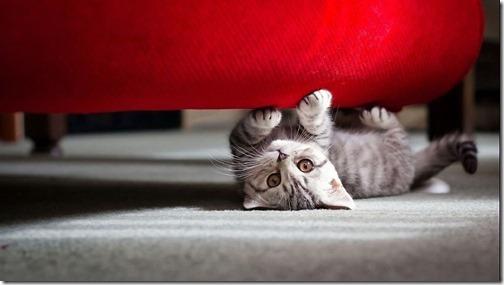 22 fotos de gats (26)