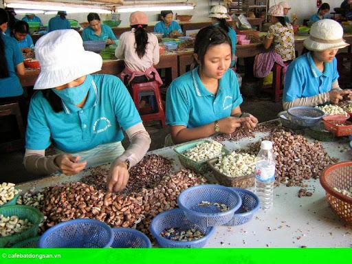 Hình 1: Doanh nghiệp xuất khẩu cần quan tâm việc phòng vệ thương mại