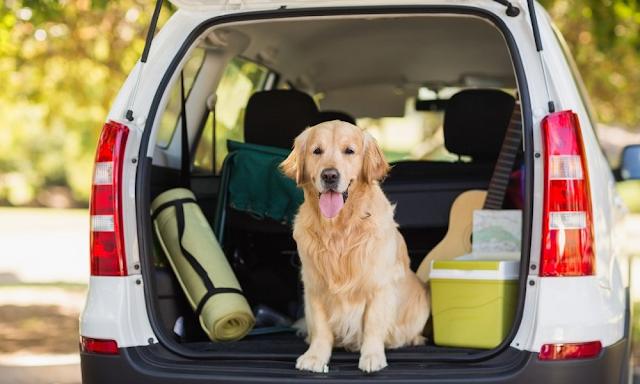 Consejos para salir de vacaciones con tu mascota