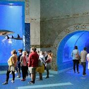 hurghada grand aquarium.jpg
