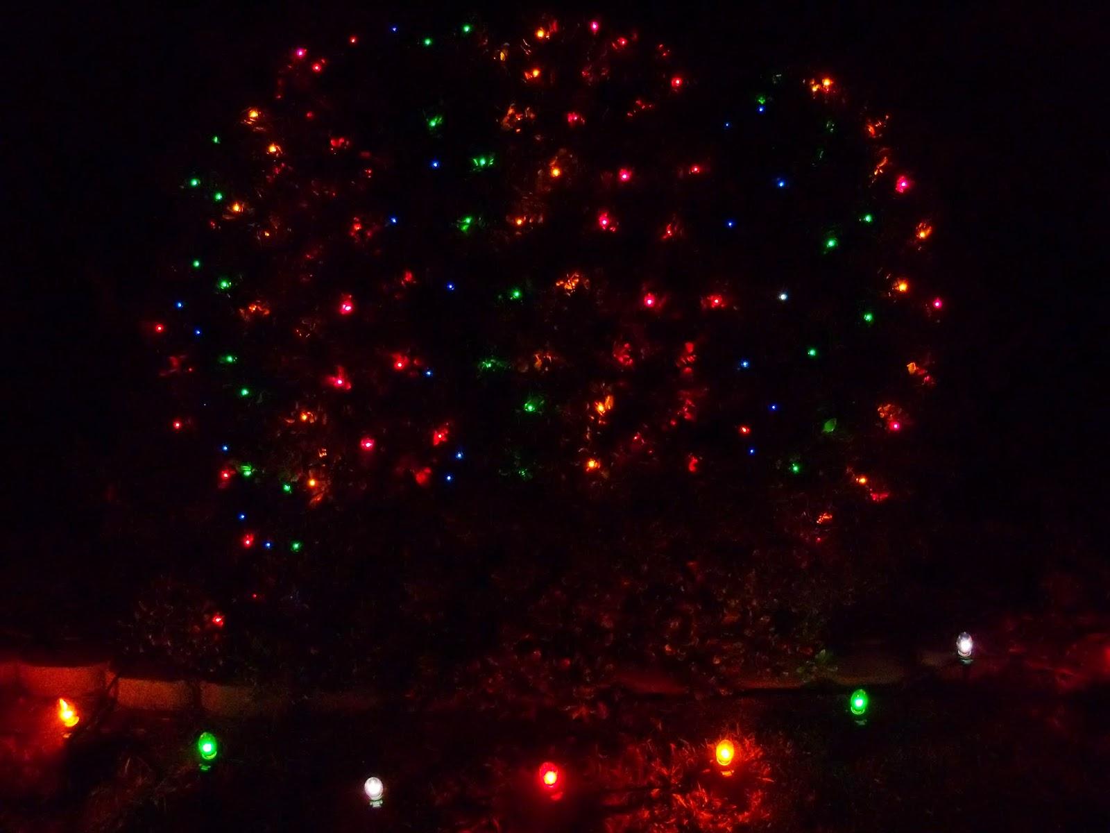Christmastime - 116_6217.JPG