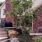 images-Seed and Sod-trees_c1.jpg