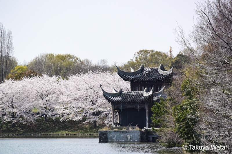 鶴見緑地公園の中国エリアが見えている