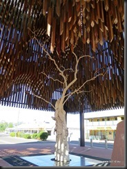 180510 113 Barcaldine Tree of Knowledge