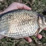 20150426_Fishing_Prylbychi_014.jpg