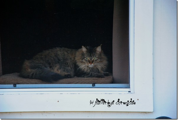 matilda in the window