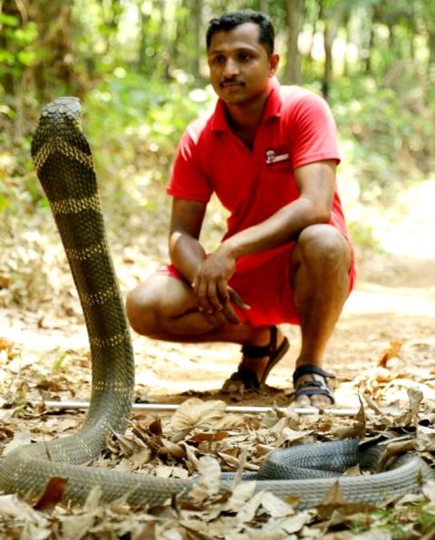 Operation King Cobra - ಹಳೆ ಮನೆಯಲ್ಲಿ ಅವಿತಿದ್ದ ಕಾಳಿಂಗ ಸರ್ಪ ಸುರಕ್ಷಿತವಾಗಿ ಹಿಡಿದ ಸ್ನೇಕ್ ಅಶೋಕ್