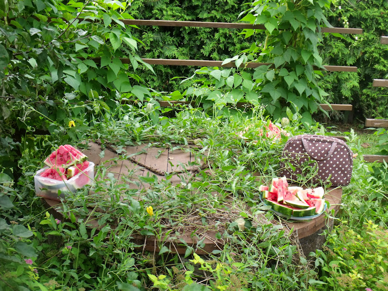 LKSB finanšu atbalstītāju pikniks, 2014.augusts - DSCF0708.JPG