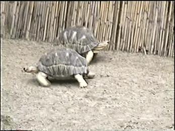 1995.06.16-019 tortues