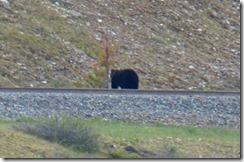 Giant Bear 2